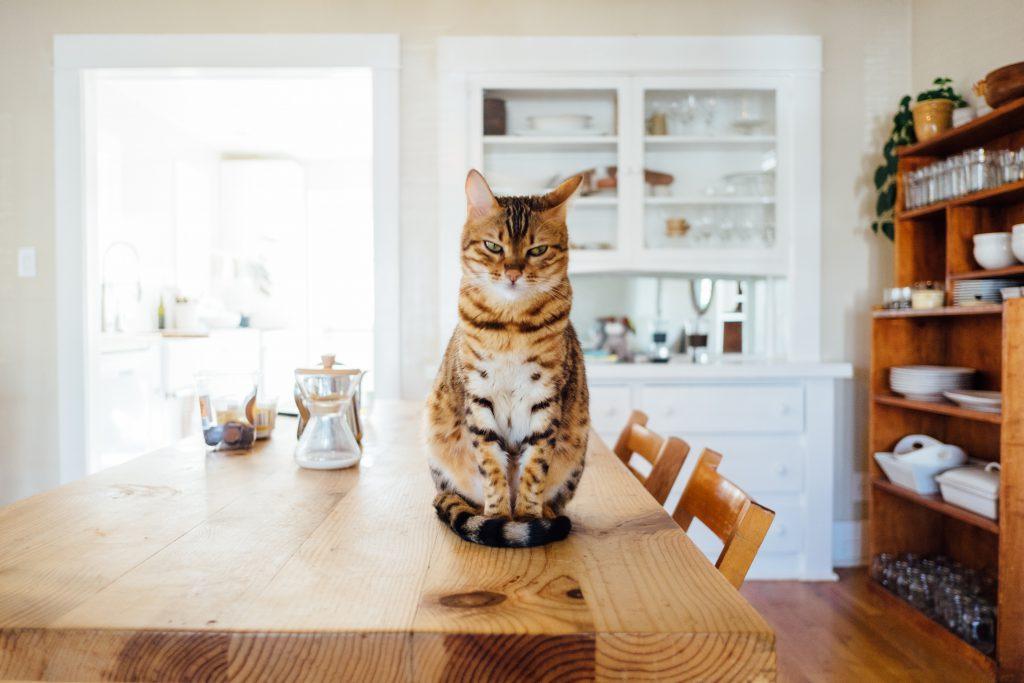 Diese Katze sieht nicht so glücklich aus - eventuell gefällt ihr unser Tipp nicht